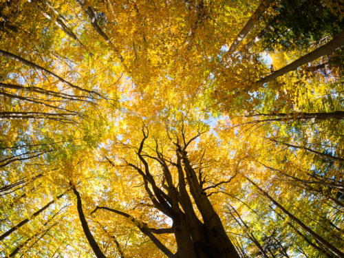 Góry Grybowskie ©www.pan-foto.com